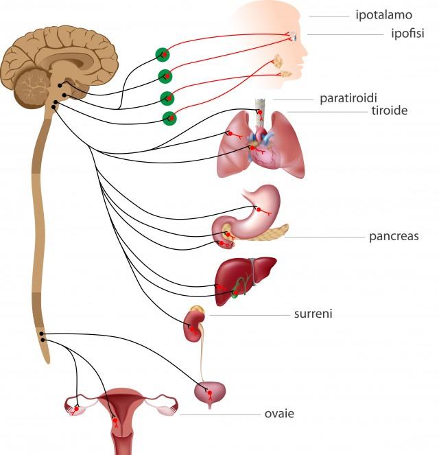 Endocrinologia - W&B Poliambulatori Brescia